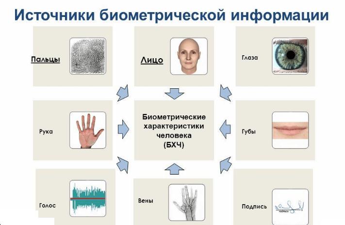 Биометрические характеристики человека